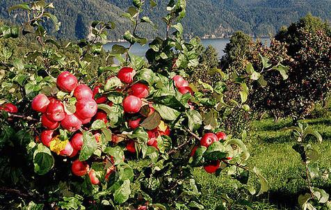Работа в яблоневом саду в разные времена года