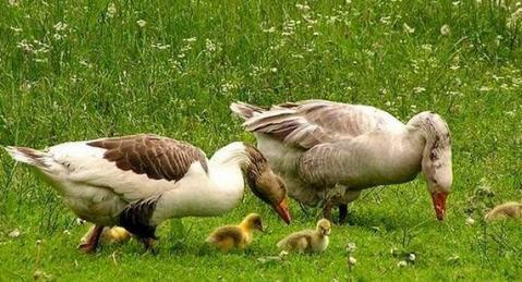 Энтерит у птиц. Причины и лечение