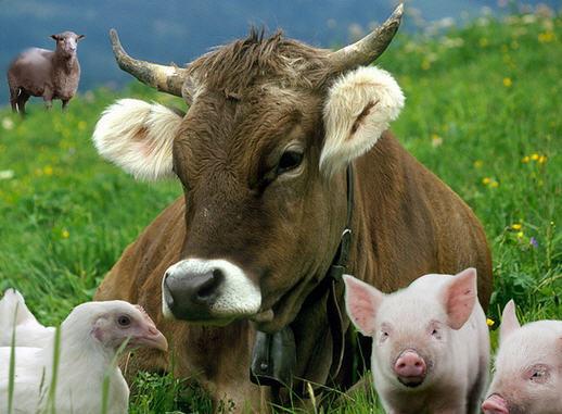 О животноводстве