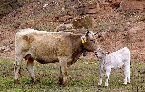 Отравления у сельскохозяйственных животных