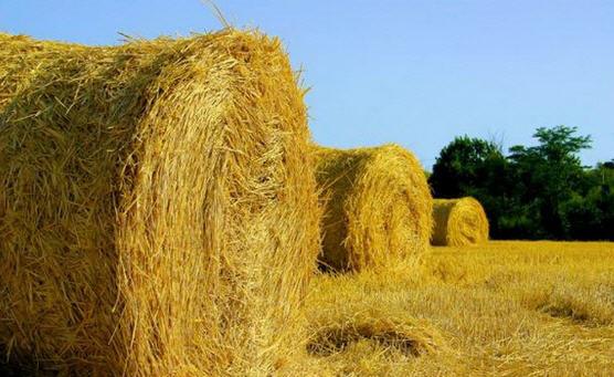 Популярные корма для сельскохозяйственных животных