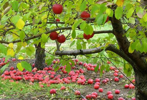 Готовь сад осенью