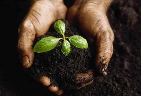 Как определить тип почвы на участке