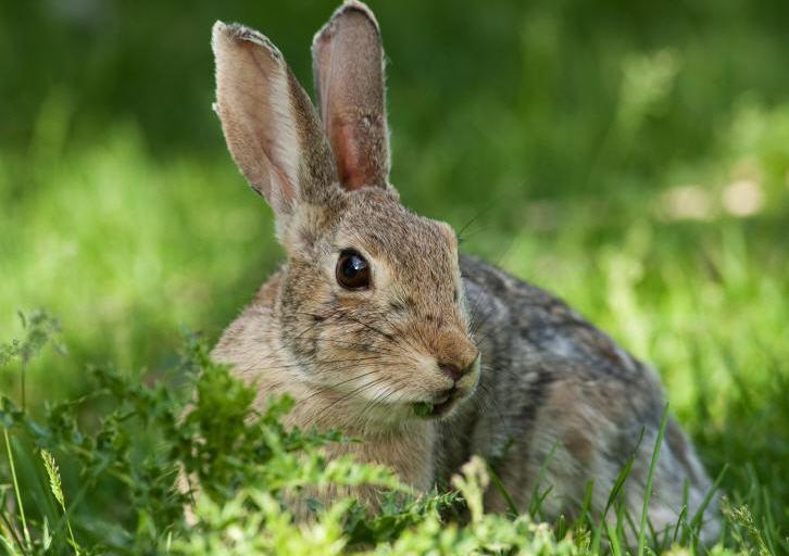 Охота на зайцев круглый год