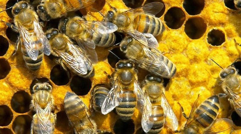 Содержание и разведение пчел