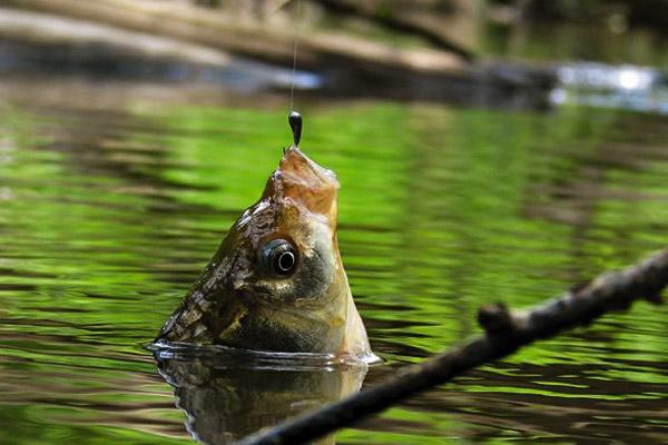 можно ли ловить рыбу на арендованных украина