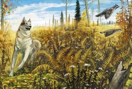 охота на рябчика с собакой