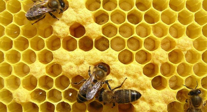 Пчеловодство - бизнес по новому