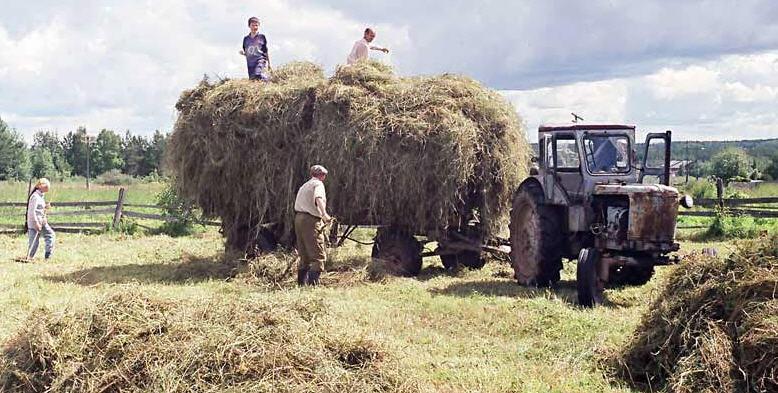 Правильная заготовка сена