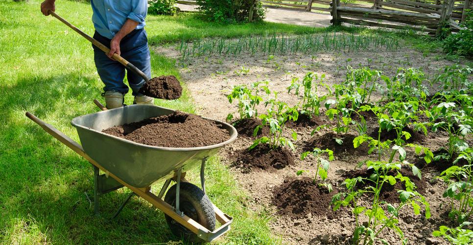 Как увеличть урожайность картофеля, проверенные способы