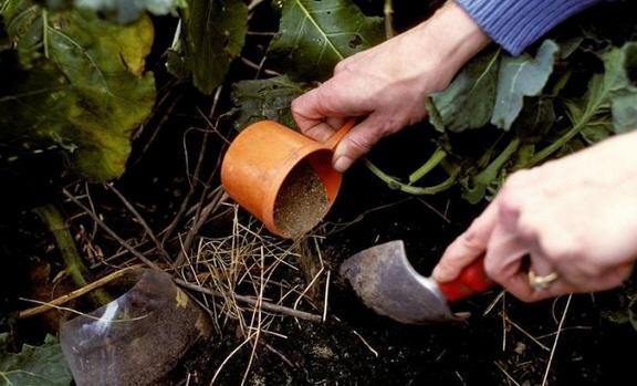 Удобряем почву калийными удобрениями под картофель