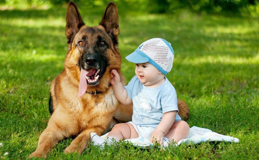 Овчарка и ребенок