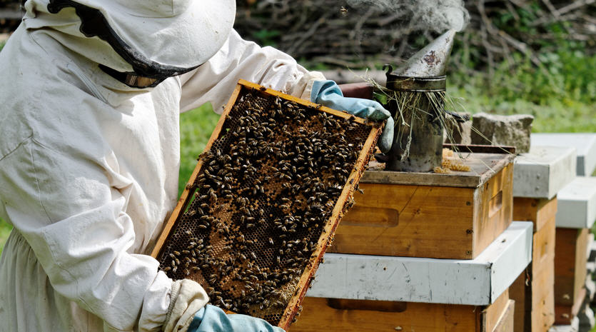 Как ухаживать за пчелами если вы новичок