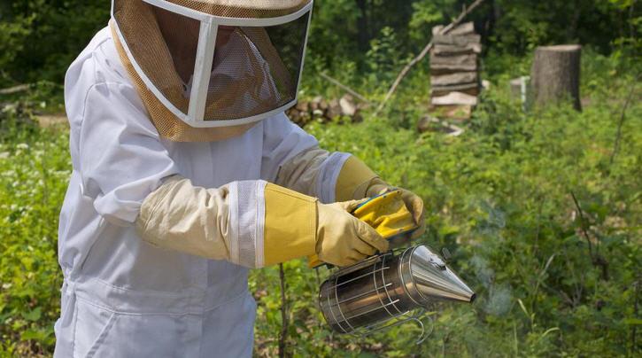 О рабочих пчелах