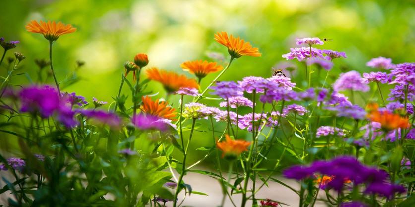 Цветочные растения