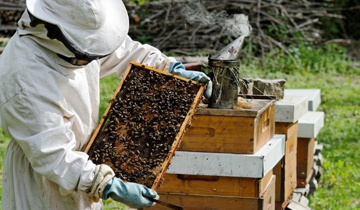 Содержание пчел: колода, борть, рамочный улей