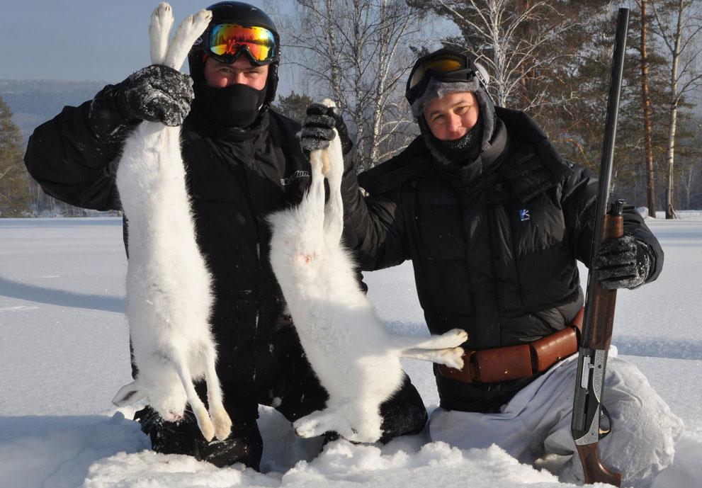 Охота на русака и беляка