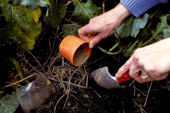 Удобрения для огорода и сада