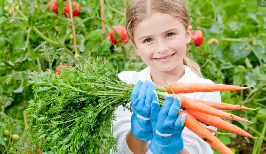 Использование соды в огороде