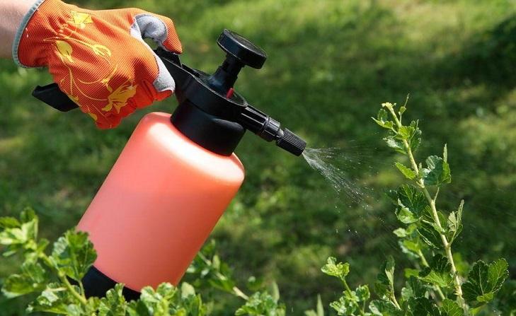 Защита растений от вредителей в середине лета (июль)