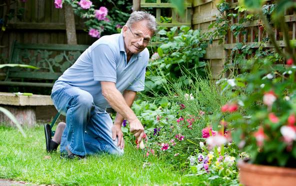 Сезонные работы в саду в июле