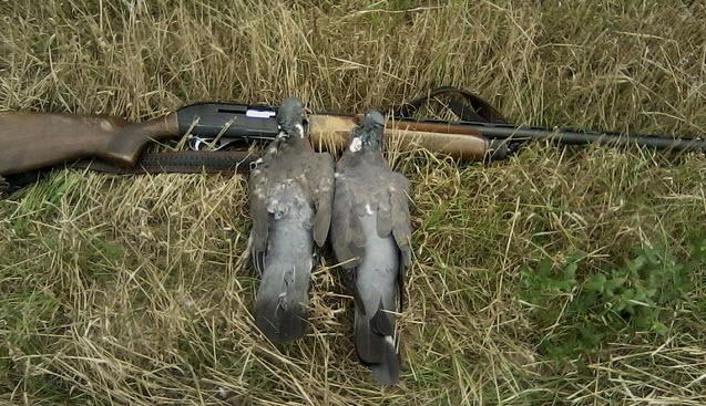 Особенности увлекательной охоты на дикого голубя