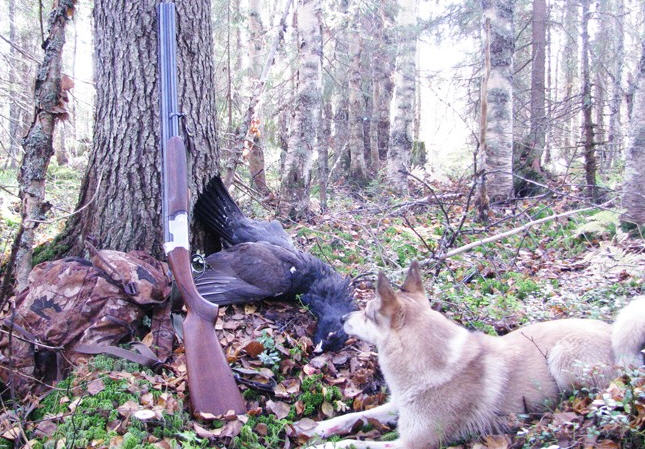 Осенняя охота на глухарей