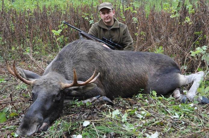 Охота на лося: охота на реву, облавная охота, охота с собакой