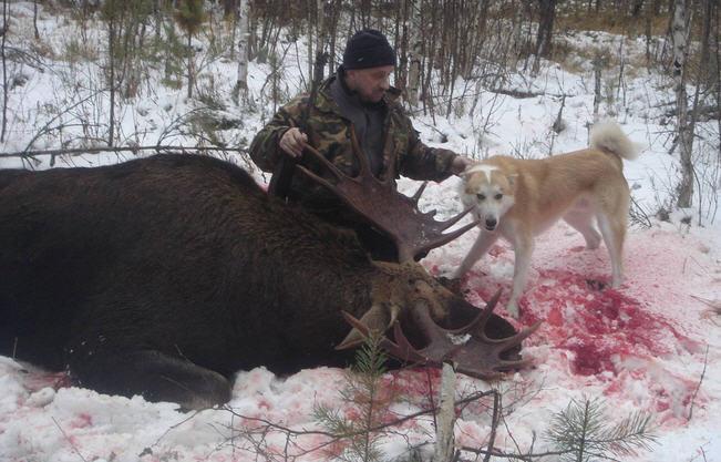 охотник и собака, добыча лось