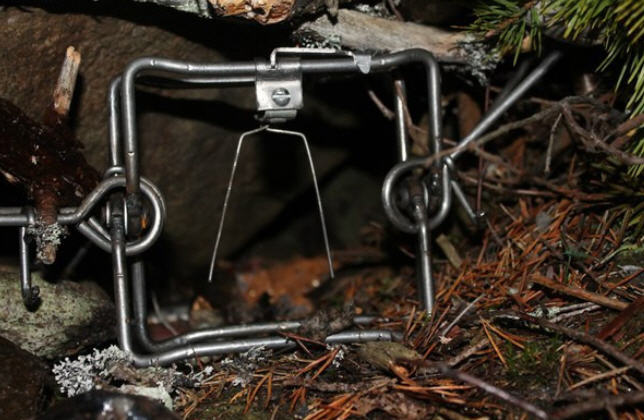 Охота на барсука в осеннее время