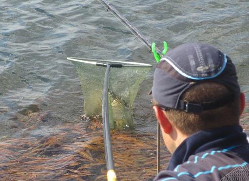 подсачники рыболовные из лески