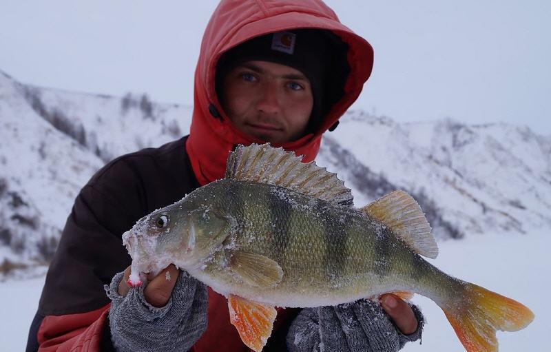 ловля окуня в зимнее время