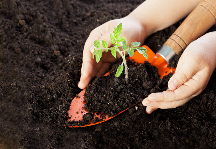 Какая должна быть температура почвы для выращивания томатов