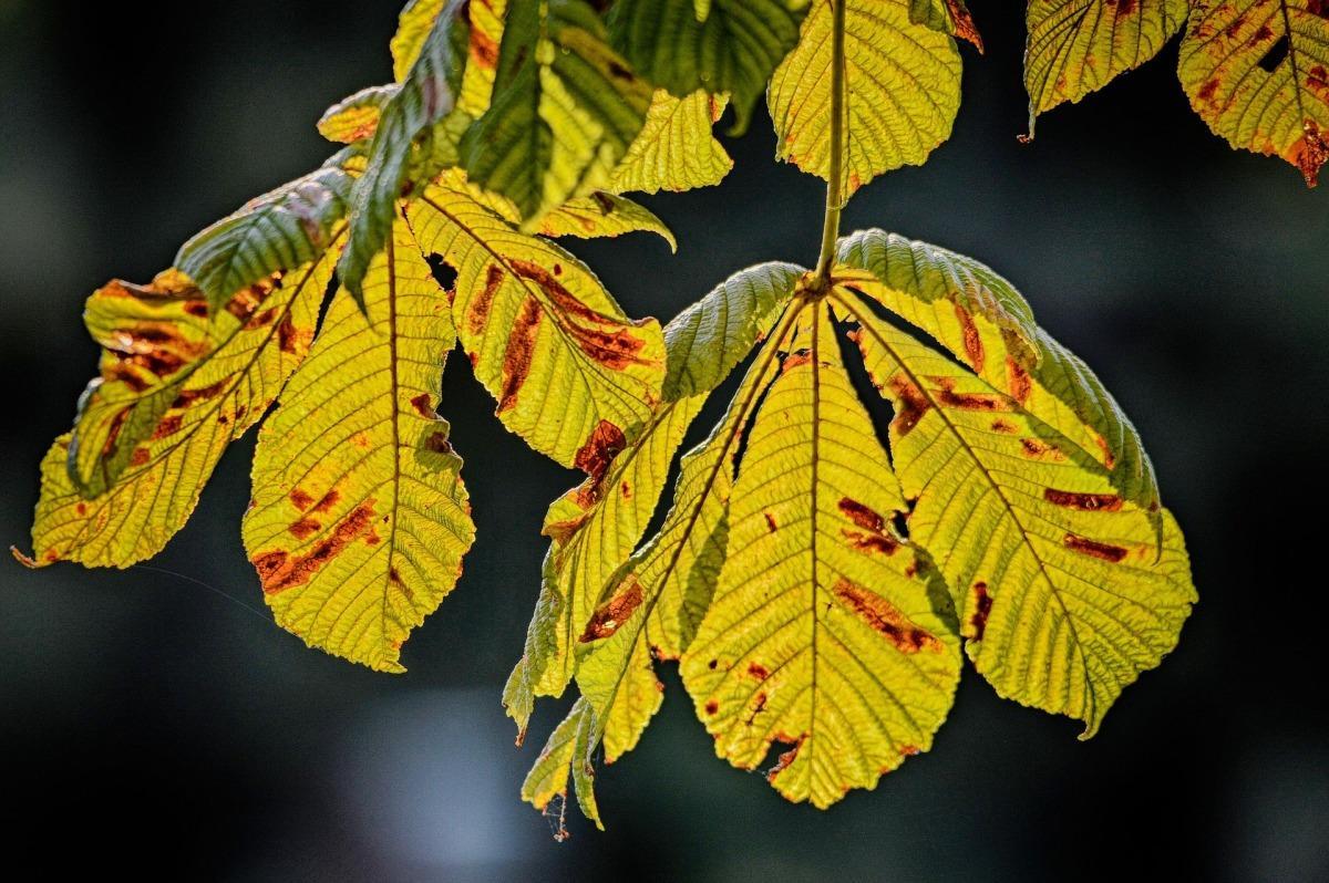 Осень: пора обработки деревьев. На что обратить внимание