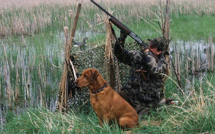 Породы собак для охоты на уток