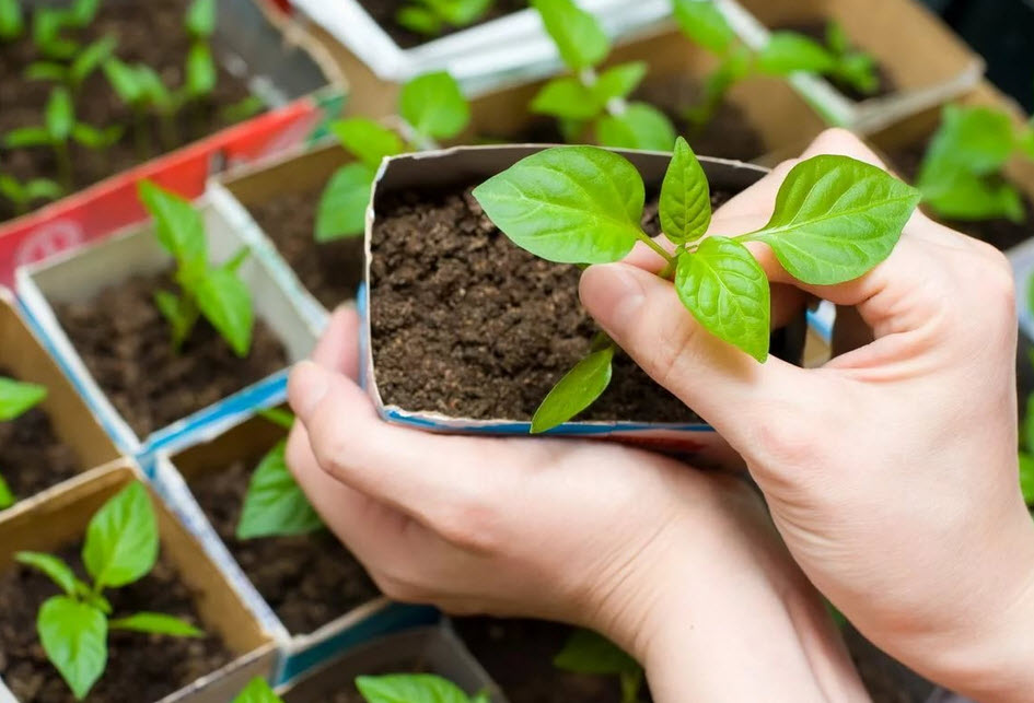 Российские производители лучших сортов семян
