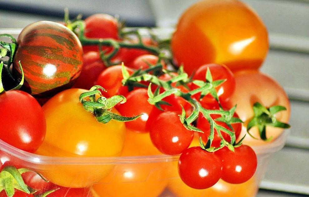 Как вырастить качественную рассаду томатов: полезные советы
