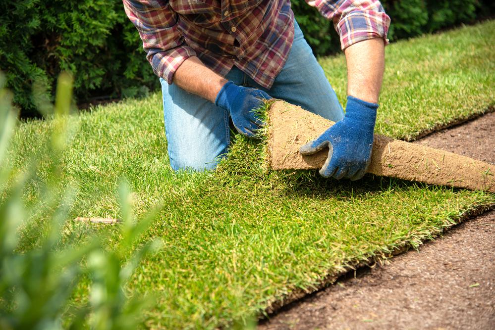 Партерный газон – лучшее решение для каждого дома.